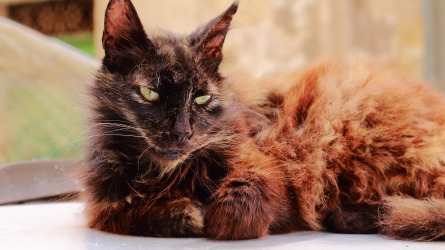 Not the most elegant feline